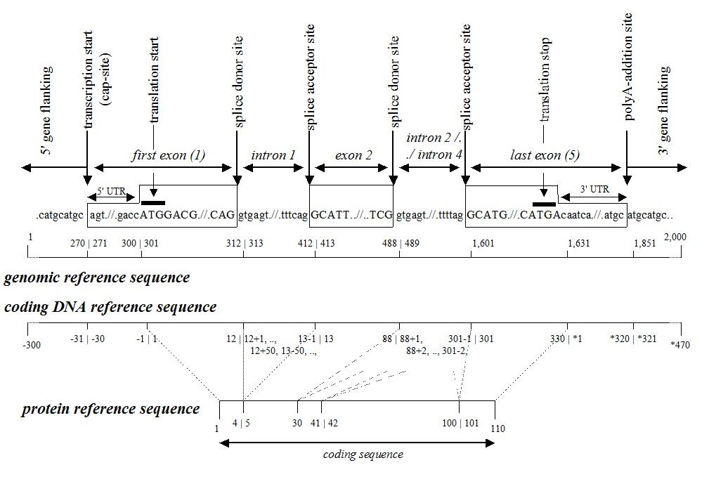Reference Sequence Figure